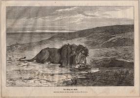 Stich Der König der Wüste (kaufen)