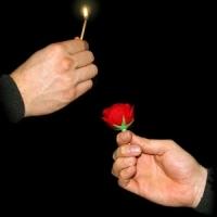 Trick Match to Rose (kaufen)
