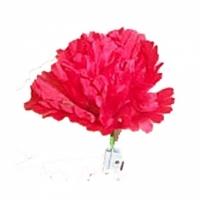 Trick Match to Flower (kaufen)