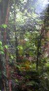 Dschungel 1 (mieten)