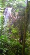 Dschungel 2 (mieten)